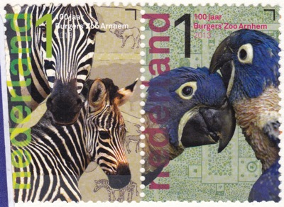 NETHERLANDS zebra