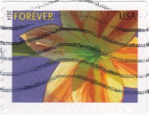 USA-flower1
